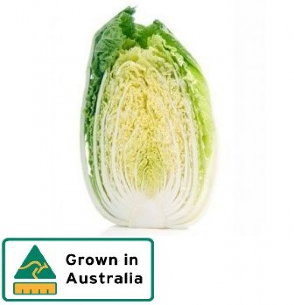 CABBAGE CHINESE HALF 00000000000273.