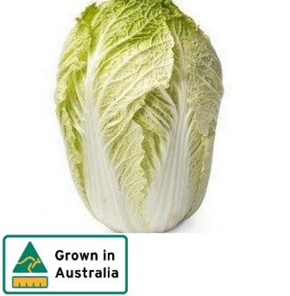 CABBAGE CHINESE WHOLE