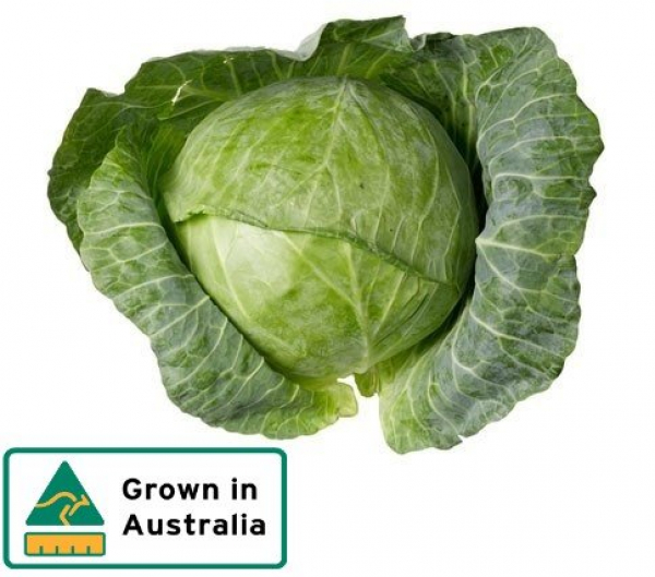 CABBAGE PLAIN WHOLE