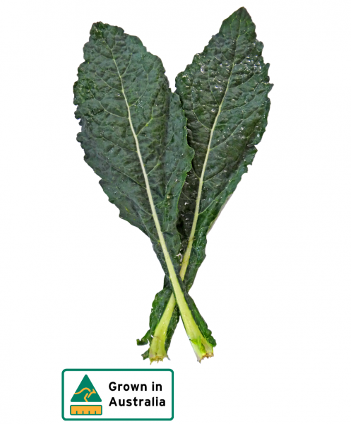 CABBAGE TUSCAN (CAVALO NERO) BUNCH
