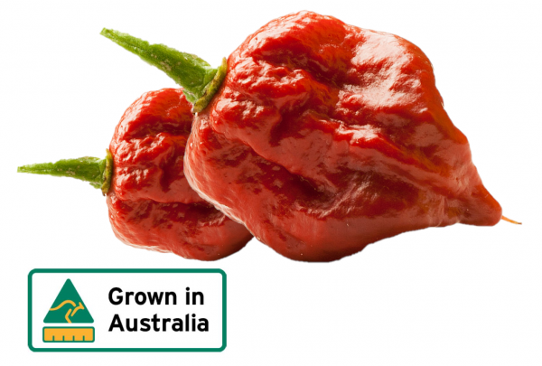 CHILLIES CAROLINA REAPER XXXX HOT KG