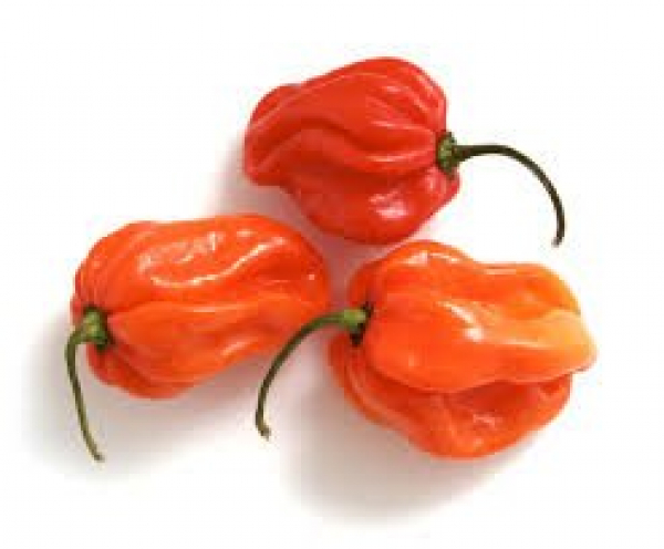 CHILLIES EXTRA HOT HABANERO KG 00200131000003.
