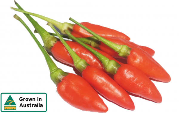 CHILLIES BULLET HOT RED KG