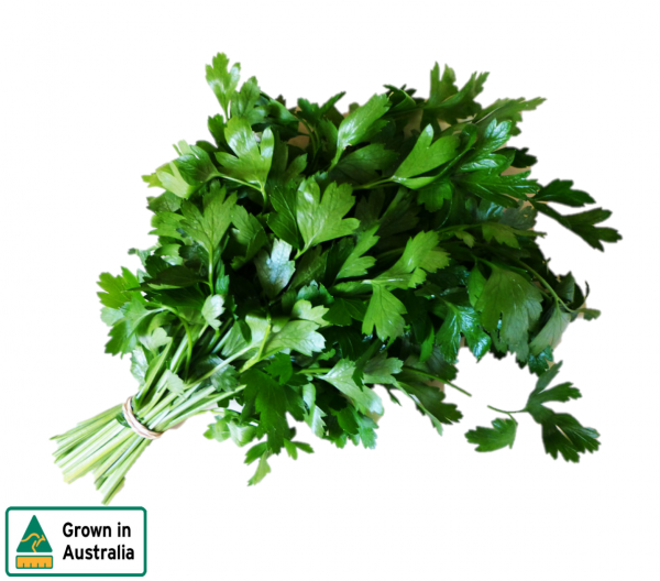 CONTINENTAL PARSLEY BUNCH (FLAT LEAF)
