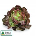 LETTUCE RED MIGNONETTE EACH